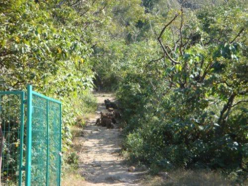 Monkeys gathering on a path in Da Jin Shan